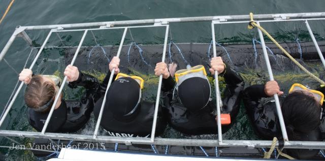 Shark Explorers' white shark cage.